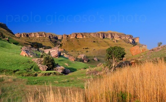 p.giocoso-1013-South Africa-009