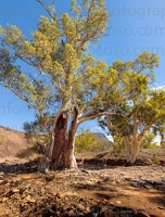 p.giocoso-0419-South Australia Landscapes-Flinders-047