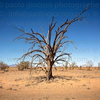 p.giocoso-0419-South Australia Landscapes-Flinders-053