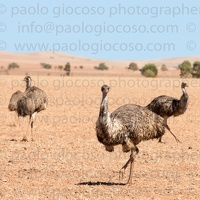 p.giocoso-0419-South Australia Landscapes-Flinders-056