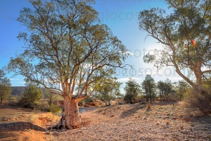 p.giocoso-0419-South Australia Landscapes-Flinders-062