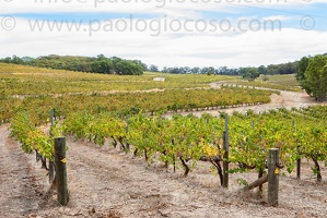 p.giocoso-0419-South Australia Landscapes-Flinders-075