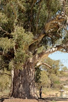 p.giocoso-0419-South Australia Landscapes-Flinders-091