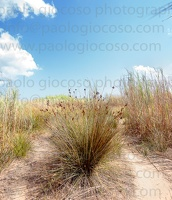 p.giocoso-0119-Wilds Beach West Sicily-022