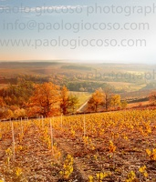 p.giocoso-0619-Troyes Champagne Aube-077
